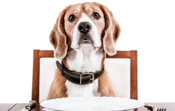 fidelización de clientes en restaurantes dog friendly. Foto de perro sentado a la mesa esperando con plato y cubiertos